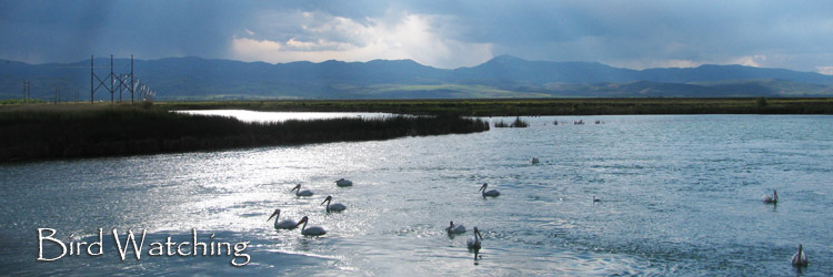 Bird Watching at the Bear Lake National Wildlife Refuge in Idaho